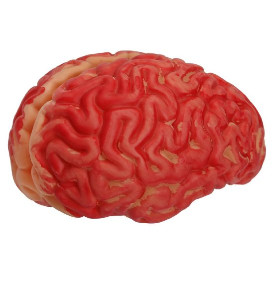 HUMAN SIZE BLOODY BRAIN Decoration Halloween